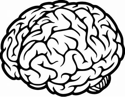 Brain Pngimg