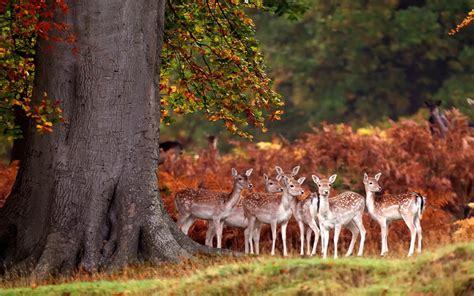 deer herd autumn forest grass trees