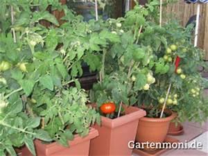 Tomaten Balkon Kübel : gem se und obst auf dem balkon ziehen gartenmoni altes wissen bewahren ~ Yasmunasinghe.com Haus und Dekorationen