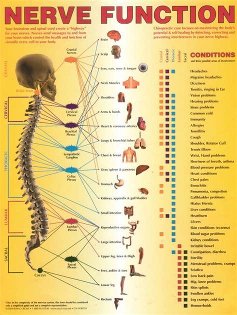 blog lamb chiropractic  wellness