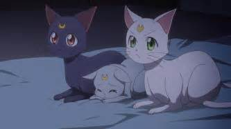 sailor moon cat sailor moon act 34 the cats mourn the of