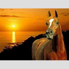 Schöne Pferde Hintergrundbilder  Googlesuche Horses