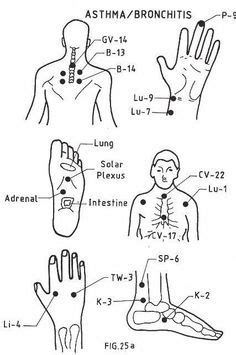 A Guide to the 12 Major Meridians of the Body | Bodies