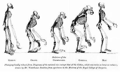 Evolution Human Timeline Species Interactive Humans Teach