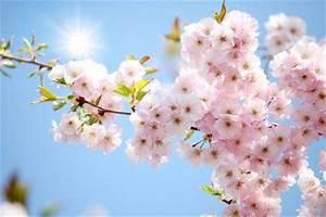 Welche Blumen Blühen Im August : fr hling ~ Orissabook.com Haus und Dekorationen