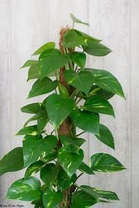 Plante D Intérieur Haute : 3 id es de plantes d 39 int rieur se plaisant l 39 ombre au ~ Dode.kayakingforconservation.com Idées de Décoration