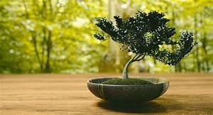 Bäume Für Drinnen : kleiner baum ganz gro bonsais sind drau en und drinnen ~ Michelbontemps.com Haus und Dekorationen
