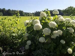 Schnell Wachsende Laubbäume Für Den Garten : minutentipp f r den garten pflanzen st tzen aber richtig ~ Michelbontemps.com Haus und Dekorationen