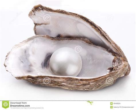 hu 238 tre avec la perle d isolement photo stock image 49458329