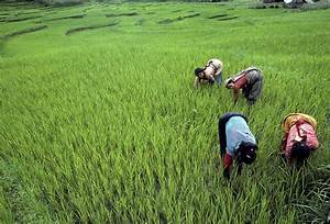 Women farmers worldwide need restrictions raised to 'level ...