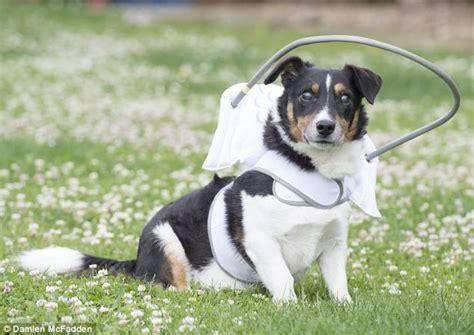 Blind Dog Bounces Back With Help From His 'halo'