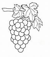 Grapes Coloring Pages Clipart Weintrauben Raskraska Vinograd Fruits sketch template