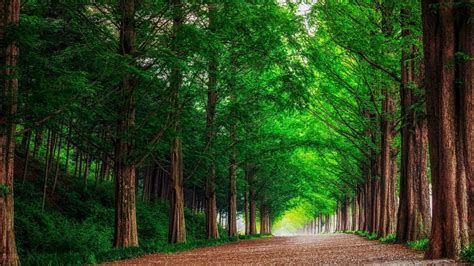 Green Forest Photo by Hd Background Green Forest Trees Road Wallpaper