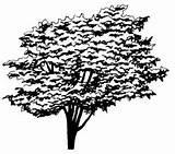 Elm Tree Coloring American Designlooter 09kb 268px sketch template