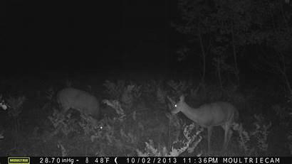 Trail Cams Camera Deer Caught Cam Crazy