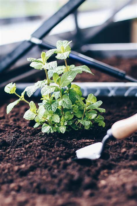 Bepflanzen Eines Hochbeetes by Hochbeet Tipps Anlegen Bepflanzen Und Leckeres Gem 252 Se