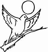 Pigeon Coloring Printable Bestcoloringpagesforkids sketch template