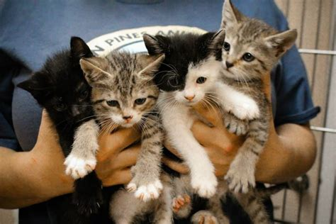 resources southern pines animal shelter