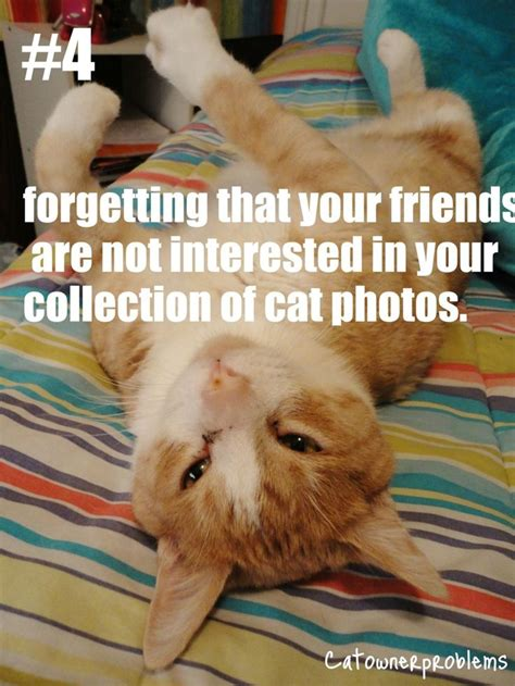 Cat Problems Meme - 17 best images about cat owner problems on pinterest computers cats and cat hair