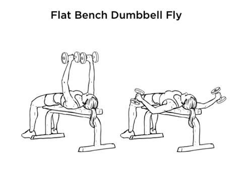 Flat Bench Dumbbell Fly Exercise For Chest