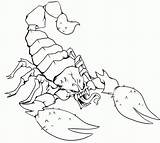 Coloring Scorpions Scorpion Mortal Kombat Popular sketch template