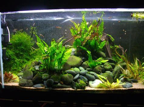 de lave aquarium de lave aquarium 28 images pierres pour aquarium d 233 coration de lave pour aquarium filtre