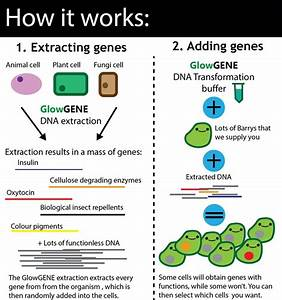 Create New Lifeforms By Cutting And Pasting Dna  By