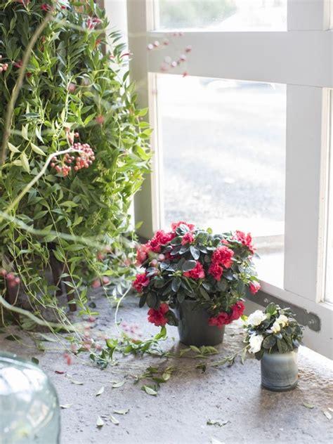 Die Besten 17 Ideen Zu Blühende Zimmerpflanzen Auf