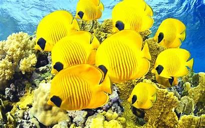 Sealife Sea Fish Underwater Fishes Px Ocean