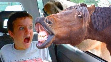 Funniest Animals Scaring People Reactions Of 2019 Weekly