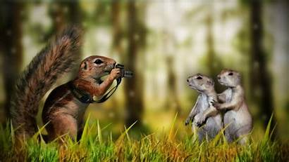 Funny Wallpapers Animals Animal