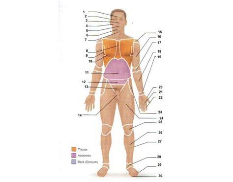 anterior surface anatomy purposegames