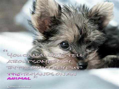 animal quotes stop cruelty  animal slogans