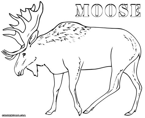 moose coloring pages moose coloring pages coloring pages to and print