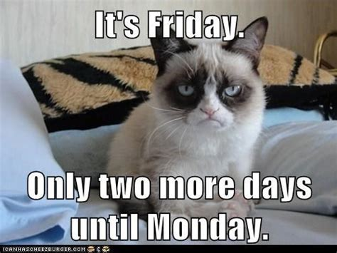 Grumpy Cat Friday Meme - pin by choose friendship company on quot friendspiration quot friendship quot
