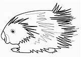 Porcupine Coloring Animal sketch template