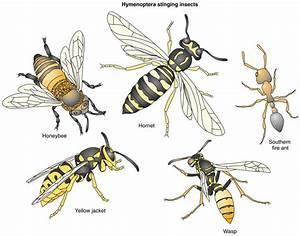 Hymenoptera Venom Allergy