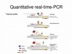 What Is Real Time Pcr  Biology   How Does It Function