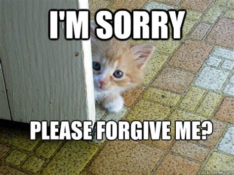 Forgive Me Meme - i m sorry please forgive me sorry cat quickmeme