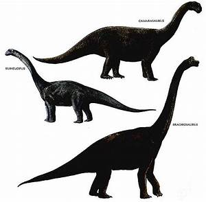 Ancient And Extinct Reptile Types The Dinosaurs Animal