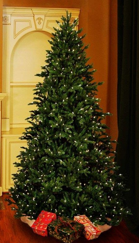 canadian fir christmas tree wow they are the best