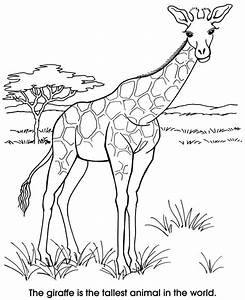 66 best coloring zoo images on pinterest With giraffe diagram