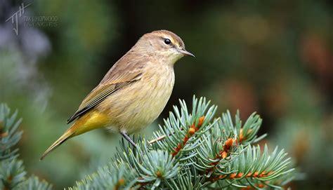 a45i0309 bird canada