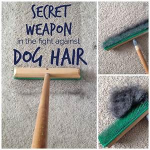 Light Sheltie My Secret Weapon That Picks Up More Dog Hair School Of