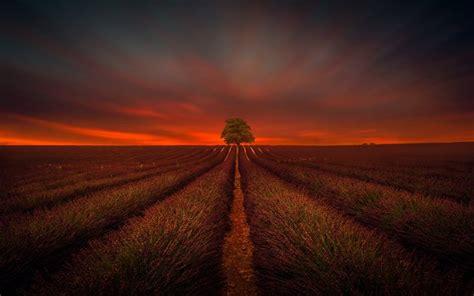 wallpapers sunset tree flower field lavender