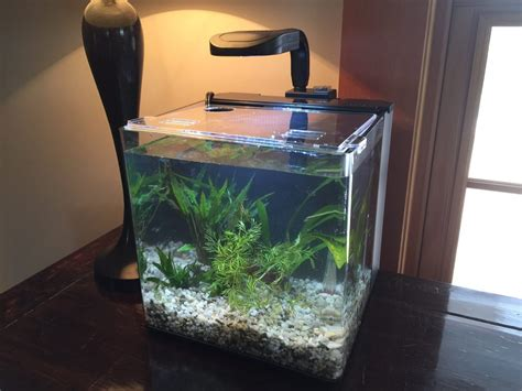 claremont pet aquarium center pet stores 201