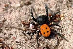 Mittel Gegen Spinnen Im Haus : viele spinnen im haus ursache wo sind die spinnen seite 2 allmystery berleben spinnen die ~ Buech-reservation.com Haus und Dekorationen