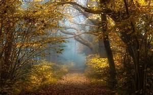 Nature, Landscape, Fall, Forest, Sunlight, Mist, Shrubs