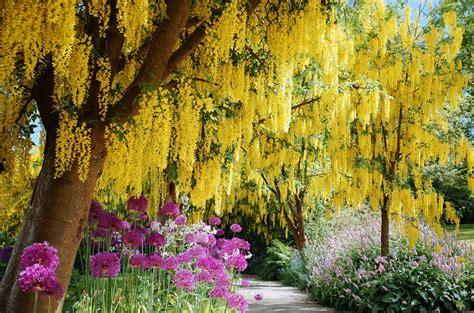 flowering trees  landscaping inspiration