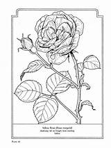 Coloring Flowers Language Pages Flower Rose Colouring Sheets Bilder Dover Books Drawings Yellow Nature Blumen Ausmalbilder Adult Uploaded User Discover sketch template